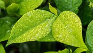 Tanie i ekologiczne opakowania żywności